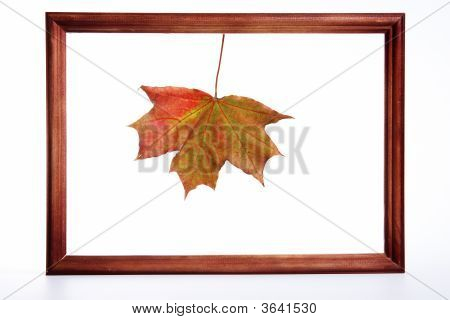 Maple Leaf In A Framework