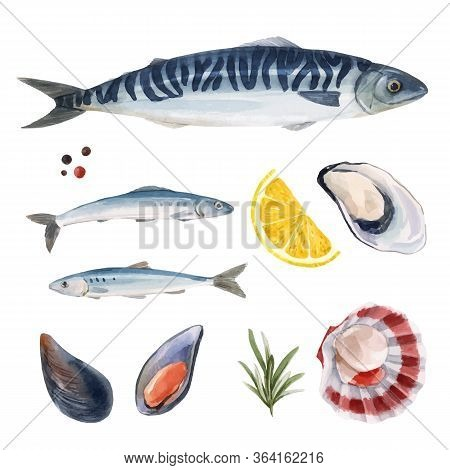Beautiful Vector Set With Watercolor Hand Drawn Sea Life Mackerel And Herring Fish. Stock Illustrati
