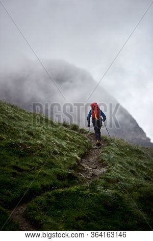 Back View Of Man Backpacker With Trekking Sticks Climbing The Grassy Hill. Traveler With Backpack Wa
