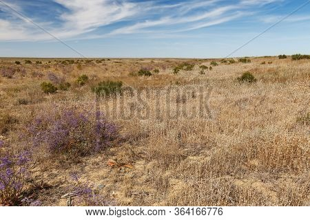 Steppe In Kazakhstan. Dry Grass And Flowering Shrub In The Steppe.