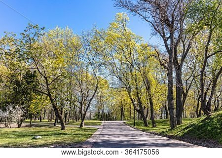 Old Trees And Walking Path In City Park In Spring. Green Landscape On Blue Sky Background