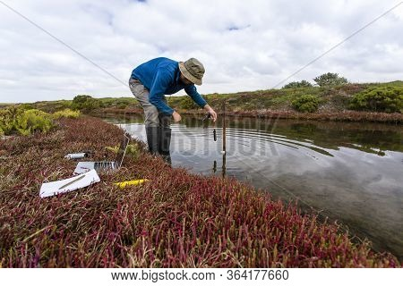 Scientist Installing A Water Level And Temperature Data Logger In A Coastal Wetland To Understand In
