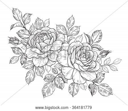 Hand Drawn Rose Flowers, Buds And Leaves Bunch Isolated On White. Vector Line Art Monochrome Elegant