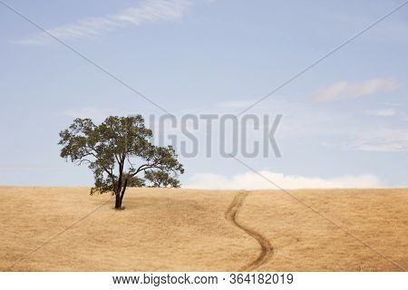 A Solitary Tree On A Grassy Dry Hill.