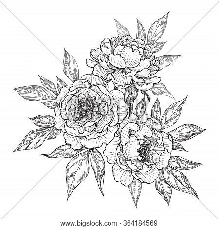 Hand Drawn Peony Flowers And Leaves Bunch Isolated On White. Vector Line Art Monochrome Elegant Flor