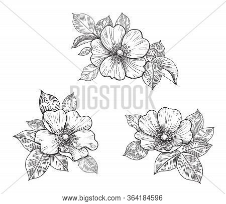 Hand Drawn Floral Set With Dog-rose Flowers And Leaves Isolated On White. Vector Line Art Monochrome
