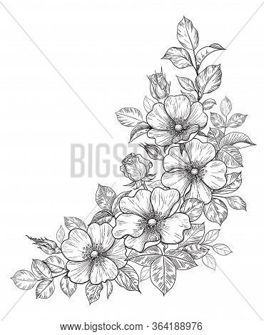 Hand Drawn Dog-rose Bunch With Flowers And Leaves Isolated On White. Vector Line Art Monochrome Eleg