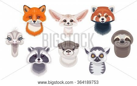 Funny Animal Faces Or Heads Isolated On White Background. Wild Animals Set. Cartoon Cute Sloth, Red