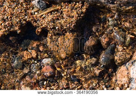 Beautiful Summer Landscape. Background With Sand And Small Pebbles. Multi-colored Sea Pebbles Covere