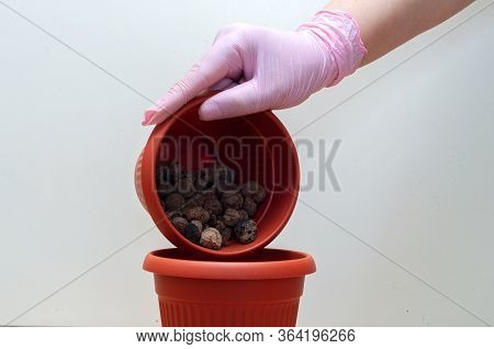 Gloved Hand Layers Expanded Clay Aggregate Drainage In Pot For Transplanting Houseplant
