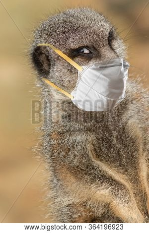 Stay Safe. Meerkat Wearing A Protective Face Mask. Funny Covid19 Coronavirus Meme Image. Composite O