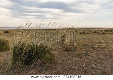 Grass Grows On The Lake. Large Hummocks Of Grass On The Shores Of A Salt Lake In The Kazakhstan Step