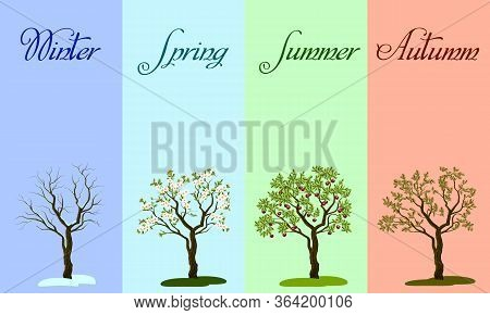 Four Seasons In Vector Illustration.illustration Of A Tree In The Four Seasons.