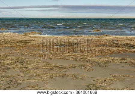 Lake Kamyslybas Is A Large Saltwater Lake In Kazakhstan. Algae On The Lake.