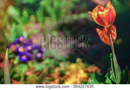 A Colorful Flower In A Public Park In Germany