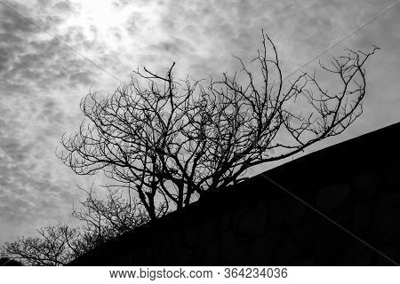 Black And White Photo Of An Outline Of Tree Branches Silhouetted Against The Cloudy Sky