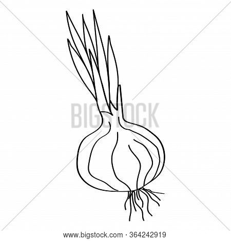 Shallot Icon Vector Onion. Vegetable Icon Vector Doodle Style
