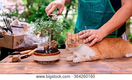 Home Gardening With Cat When Lock Down And Self-quarantine. Recreation Activity At Botanic Garden Du
