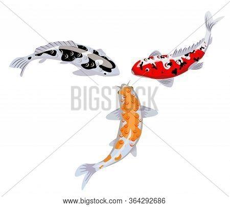 Koi Carp Fishes Vector Illustration. Japanese Koi Fish Isolated On White Background, Chinese Goldfis