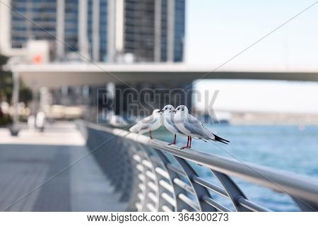 Seagulls Sit On The Parapet Against The Backdrop Of The City Landscape. Birds Stand On The Fence On