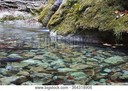 Detail Of Mountain Stream From Nerei Gorges National Park,  Romania