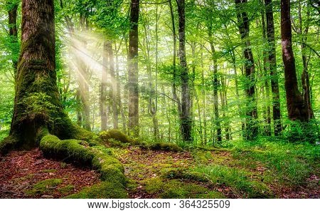 Beautiful Rays Of Sunlight In A Green Forest. Montenegro
