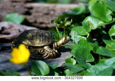 Metallic Turtle In A Field Of Colors. Symbol Of Feng Shui.