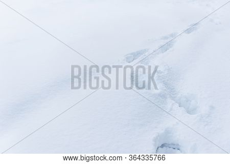 White Snow With Traces Of Man. Top View Of Human Footprints On White Snow. Footprints Fresh Snow. Fo