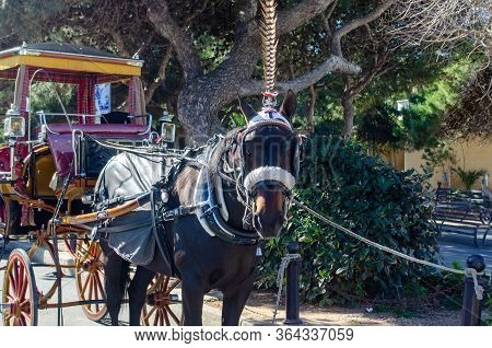 Rabat Malta- 7 February 2020: Horse With Carriage For Tourist Rides