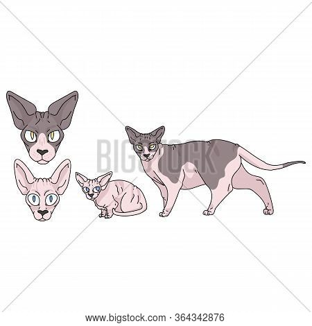 Cute Cartoon Sphynx Cat Set Vector Clipart. Pedigree Exotic Kitty Breed For Cat Lovers. Purebred Dom
