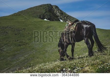 А Black Horse Grazes On The Mountainside In The Ulagansky District Of The Altai Republic, Russia