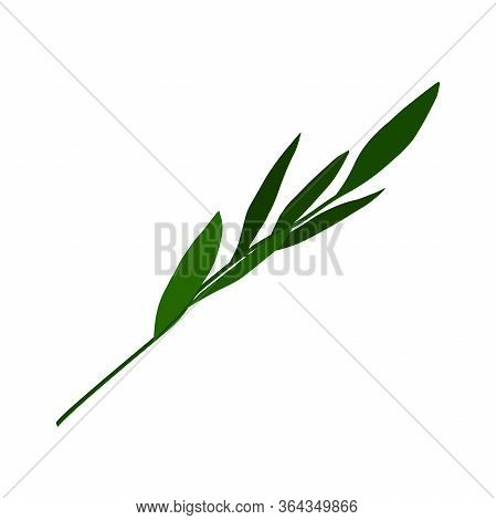 Vector Plant. Hand-drawn Green Branch With Leaves Isolated On White Background. Gentle Plants Sign.
