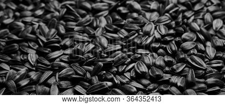 Sunflower Seed Texture Background. Seeds In A Black Shell, Pattern. Closeup Photo Of A Lot Of Seeds.