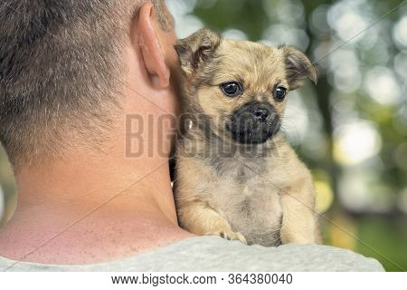 The Young Man Holding On The Shoulder Of A Little Puppy, Animal Love Concept