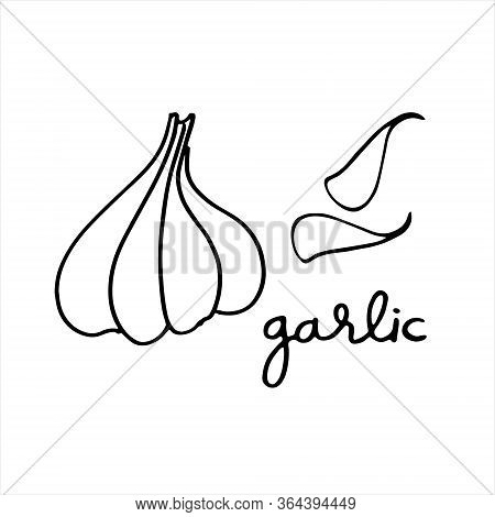 Garlic Bulb And Cloves. Black And White Vector Illustration With Hand Lettering. Perfect For Colorin