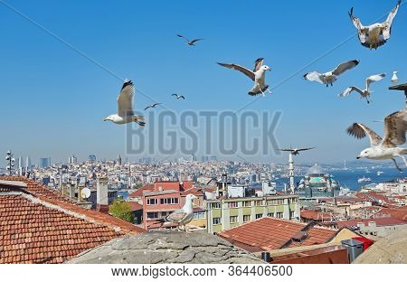 View Of The Bosphorus Bay From The Roof. Red Roofs Of Istanbul. Gulls Fly To Istanbul, Turkey. Panor