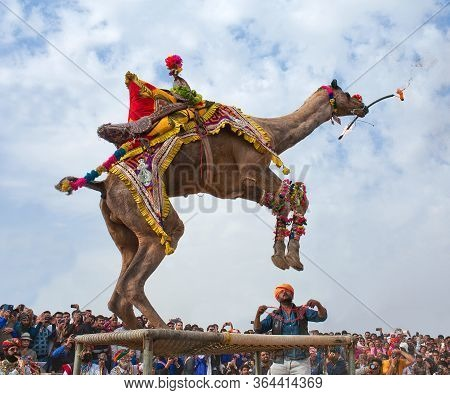 Bikaner, India - January 12, 2019: Dromedary Camel Dancing With A Flaming Torch During Annual Camel