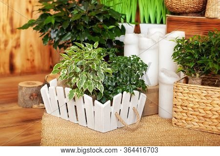 Collection Of Various Home Plants In Different Pots. Potted Plants At Home. Potted Plants On Wooden