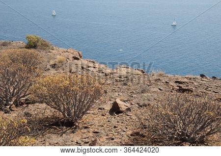 Xerophytic Scrub Of Balsam Spurge, Euphorbia Balsamifera And Sailing Boats.