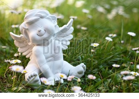 Cherub And Daisy Flowers In The Field
