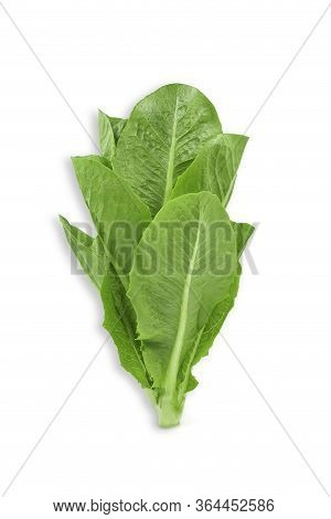 Raw Organic Romaine Lettuce Or Green Cos On White Isolated Background With Clipping Path. Fresh Cos