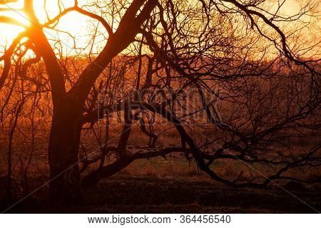 Sprawling Crown Of A Tree Against A Fiery Red Sunset