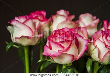 Lovely Bouquet With Big Flowers Of Roses Of Bright Pink And White Color Are Staying On The Table. Gr