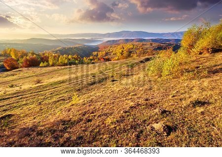 Autumn Sunrise In Mountainous Countryside. Trees In Golden Foliage On The Meadow In Weathered Grass.