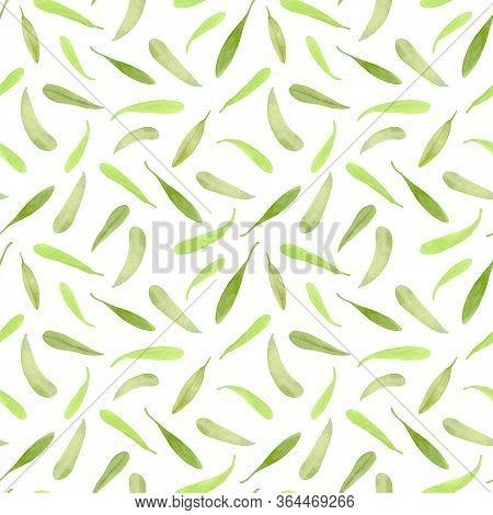 Watercolor Tea Tree Leaf Seamless Pattern. Hand Drawn Illustration Of Melaleuca. Little Green Fallen
