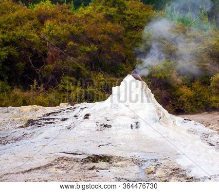 The world famous Lady Knox geyser. The beginning of a daily eruption. Volcanic vapor. The Waimangu Volcanic Rift Valley, the North Island, New Zealand. The largest geyser-like feature in the world