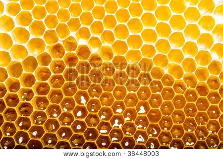 unfinished honey making in honeycombs