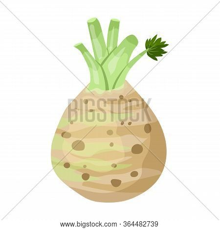 Celery Root Vector Icon.cartoon Vector Icon Isolated On White Background Celery Root.