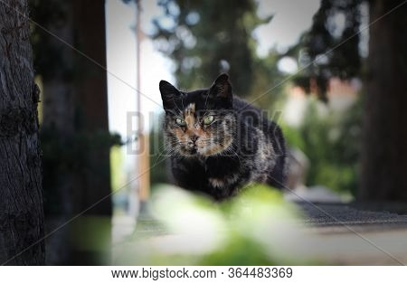 Interested Black-redheaded Kitten With Magical Green Eys Sits On Cemetery Wall And And Looks Intentl