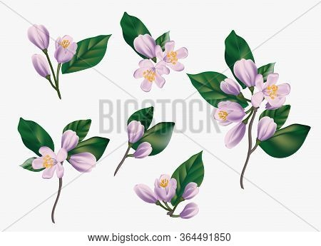 Watercolor Violet Flowers Isolated On A White Background. Realistic Hand Painted Vector Illustration
